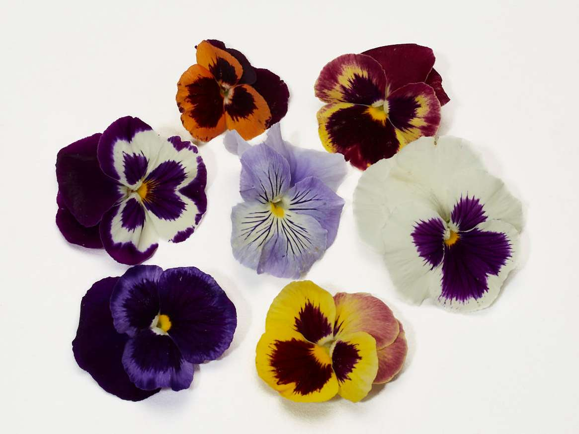 Edible Pansies Flowers